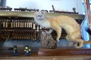giant stoat....cheese it!